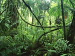 selva 2